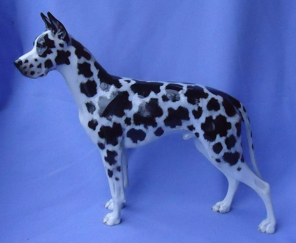 Great Dane Patient And Friendly Great Dane Harlequin Great