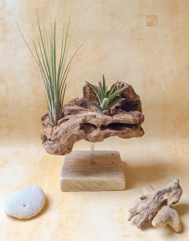 objet en bois flott et ses deux tillandsias par l 39 atelier de corinne accessoires de maison. Black Bedroom Furniture Sets. Home Design Ideas