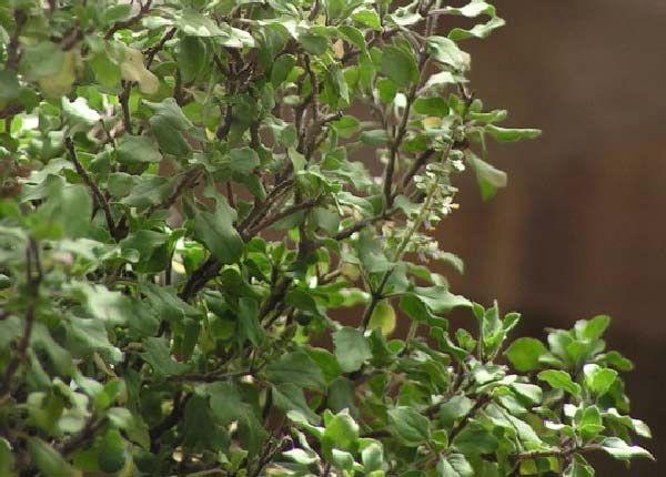 6 plantes qui attirent les nergies positives selon le feng shui maison feng shui plants - Plante d interieur porte bonheur ...