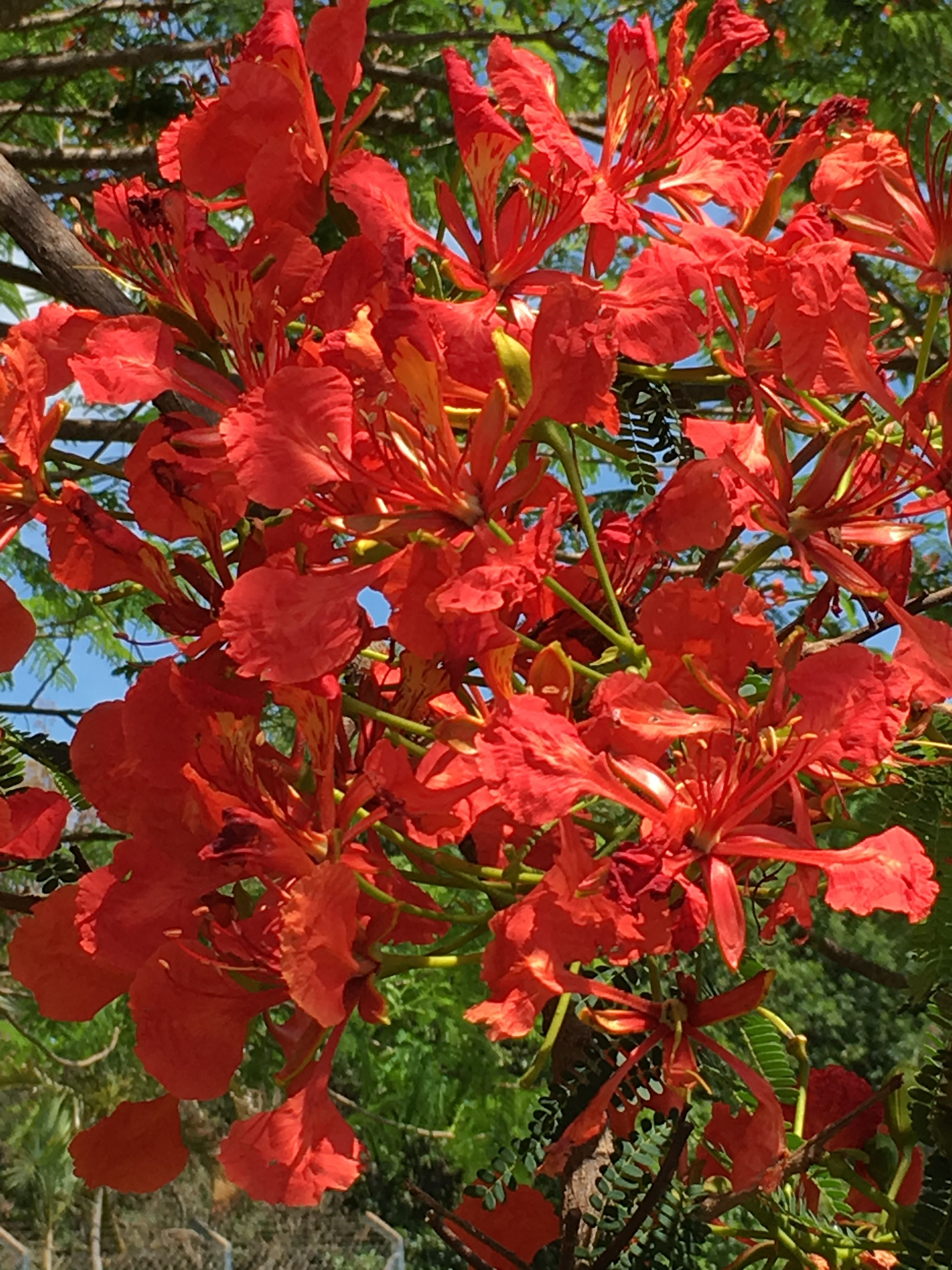 Pin by ประภา on ดอกไม้ Flowering trees, Flower pictures