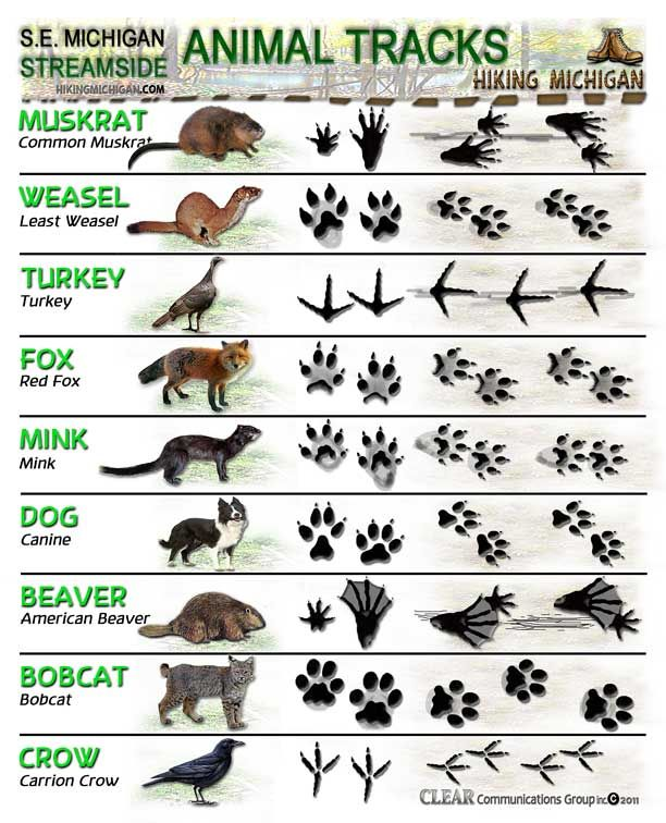 Animal tracks identification sheet case you  re out hunting heffalumps and woozles also id sheets do know your rh pinterest