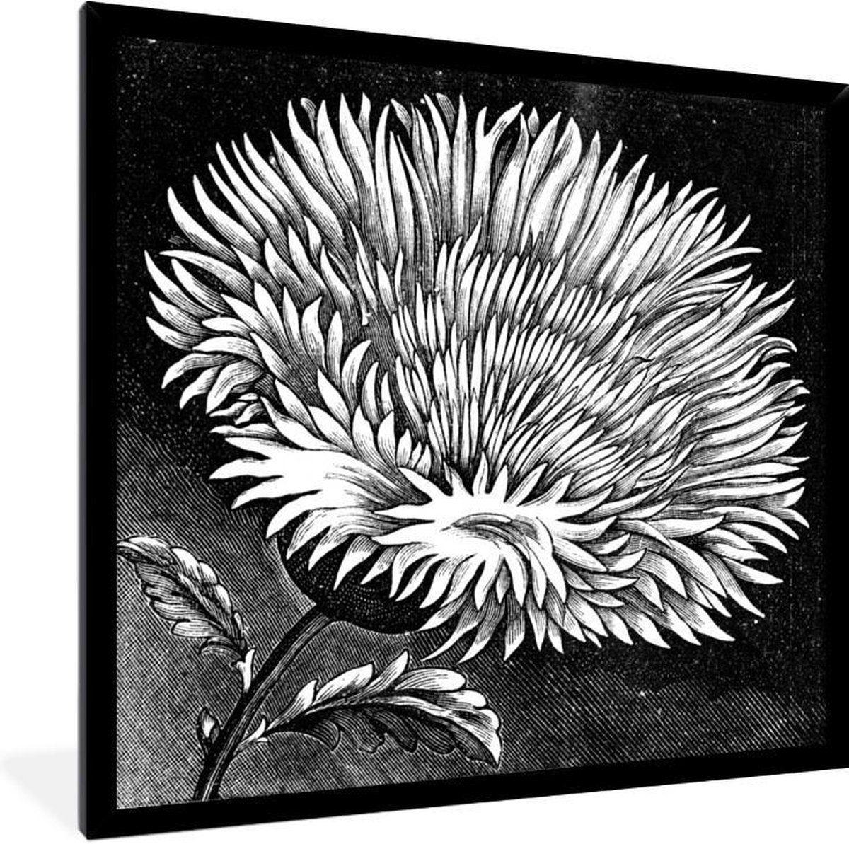 Foto In Lijst Illustratie Van Een Korenbloem In Het Zwart Wit Fotolijst Zwart 40x40 Zwart Wit Illustratie Canvas Schilderij