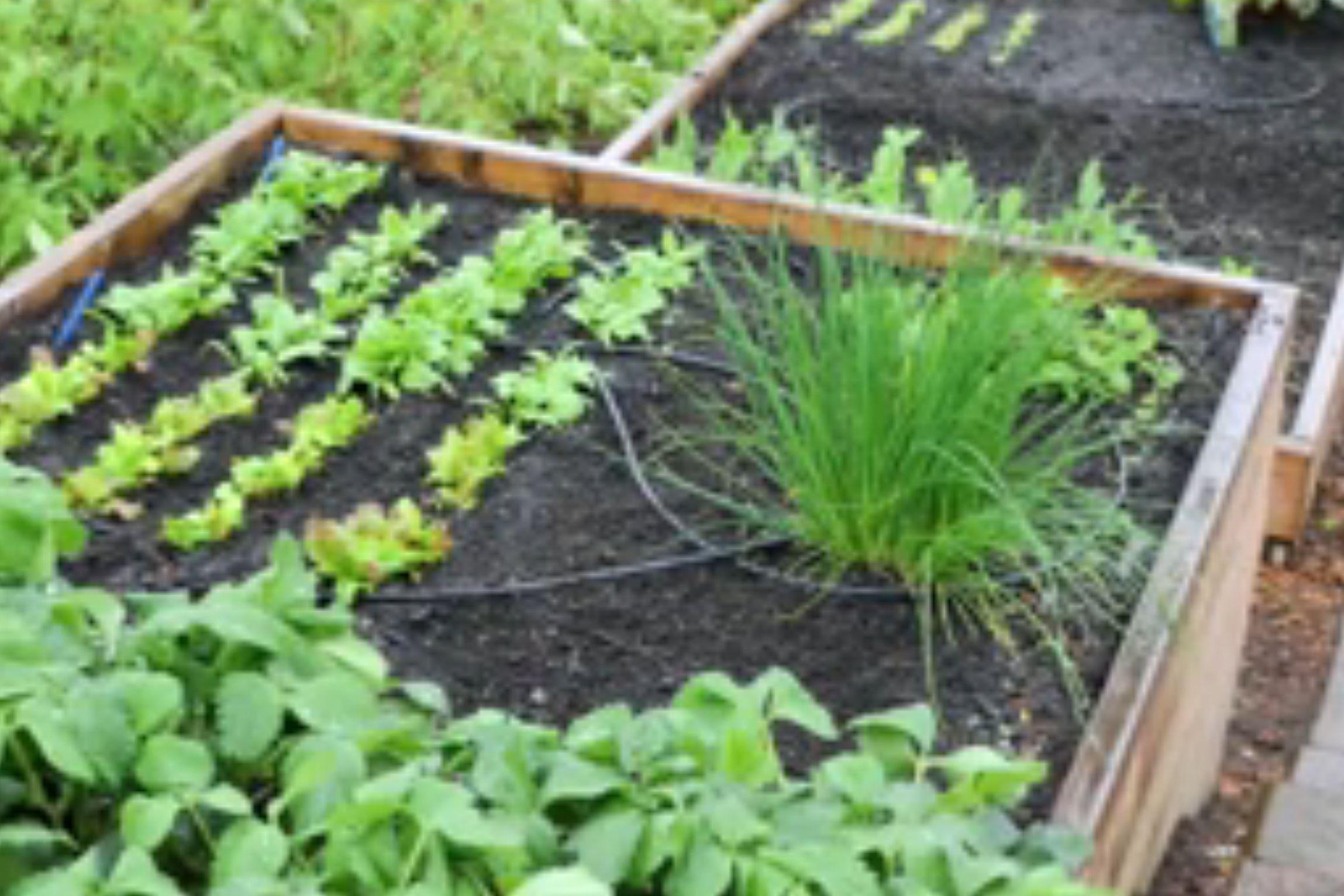Gravity Drip Bucket Irrigation Systems Garden Irrigation
