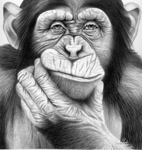 Chimp face   Umenie, Budha a Zvieratá