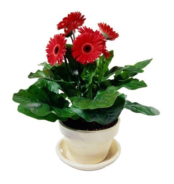 Ideas For Planter Drip Trays Flower Pots Drip Tray Mini Plants