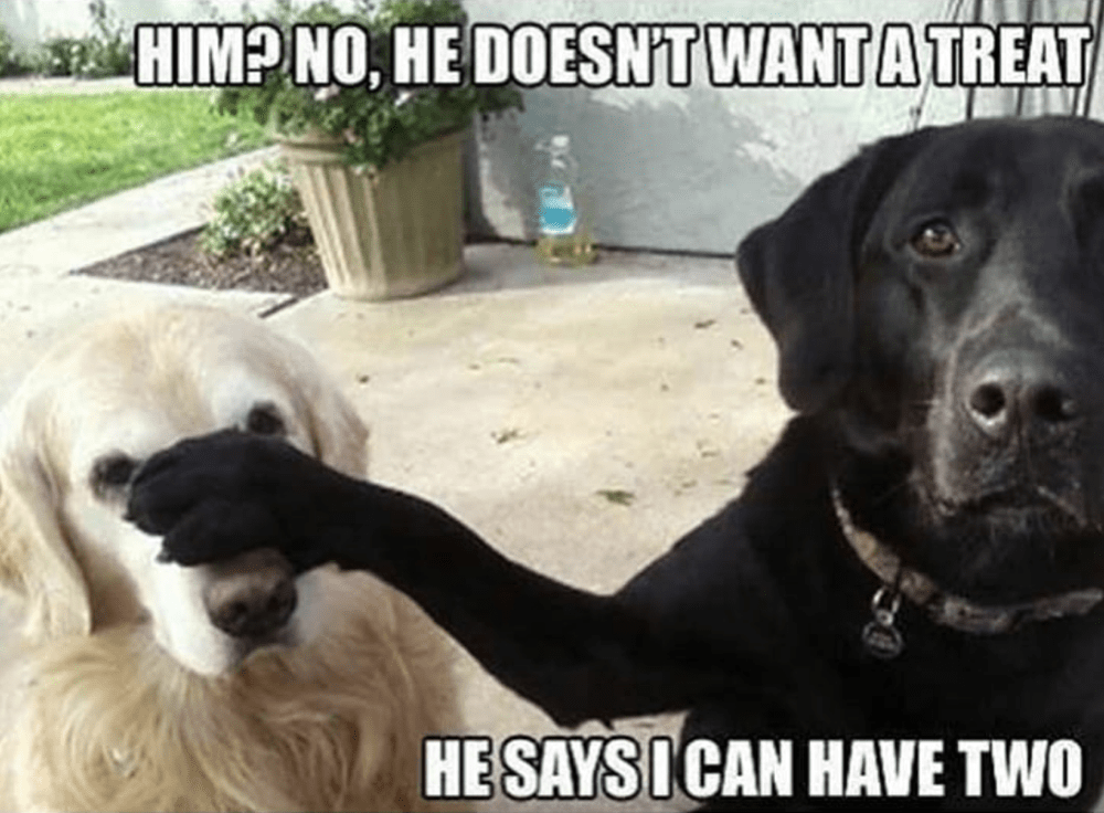 Need A Laugh These Animal Memes Should Do The Trick Funny Dog Memes Funny Dogs Silly Animals