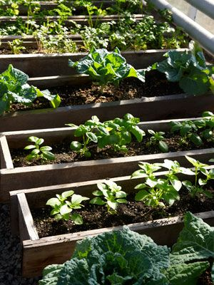 Why Start Your Own Seeds Here are five good reasons Organic