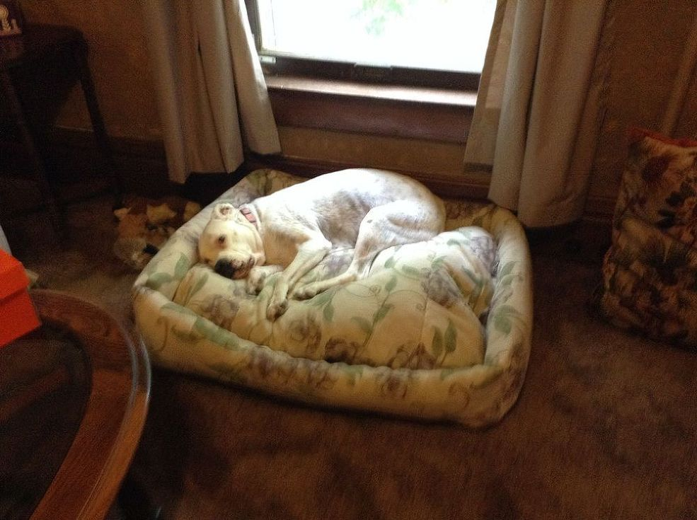 Making a Dog Bed From Old Comforter