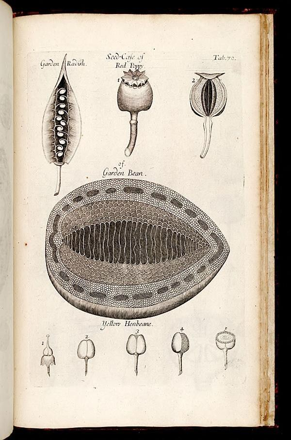 Nehemiah Grew The Anatomy Of Plants 1682 Herbal Pinterest
