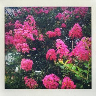 Reese Witherspoon Good morning #sunshine #NOLA #morningrun