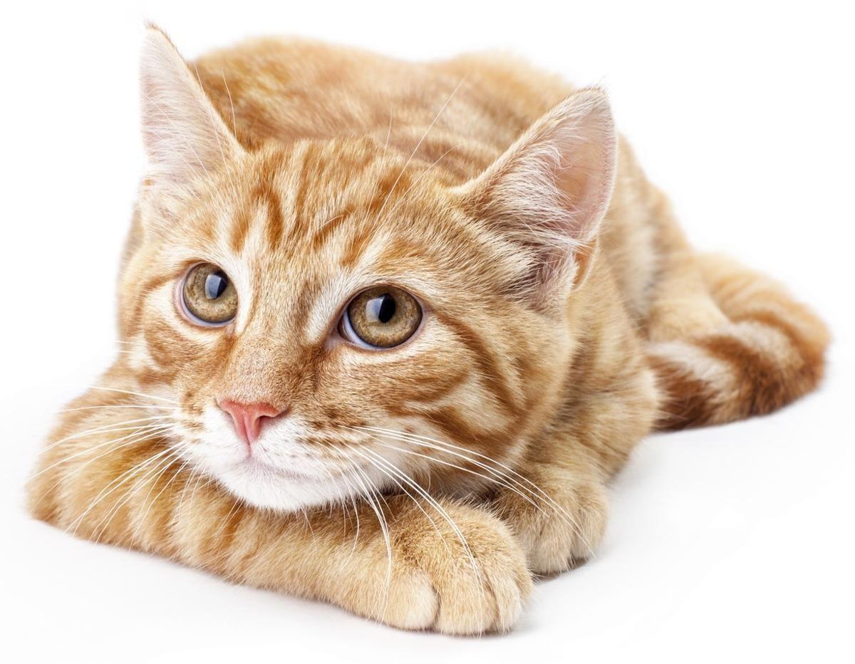 Awww soooo sweet! Jacq. Tabby cat names, Tabby kitten