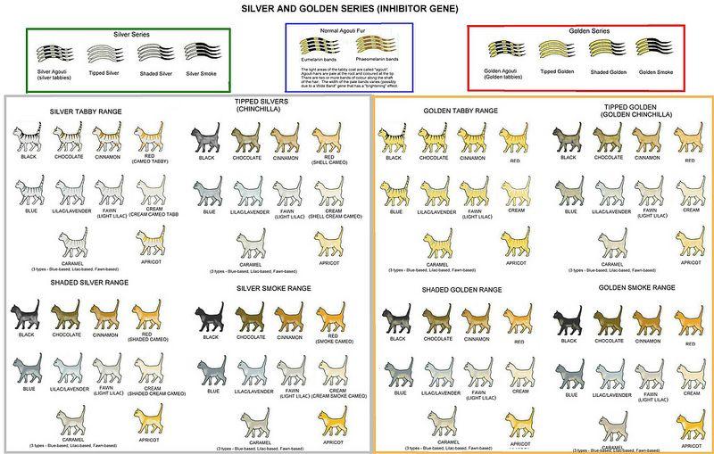 Silver & Golden Series Cats