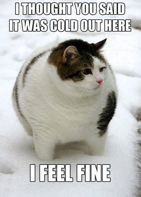 What Do You Mean It S Cold Outside Cute Animals Animals Funny Animals