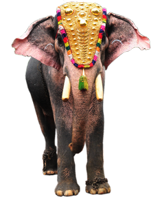 Kerala Elephant Png Hd Elephant Images Elephant Elephant Wallpaper Download 8 kerala elephant free vectors. kerala elephant png hd elephant
