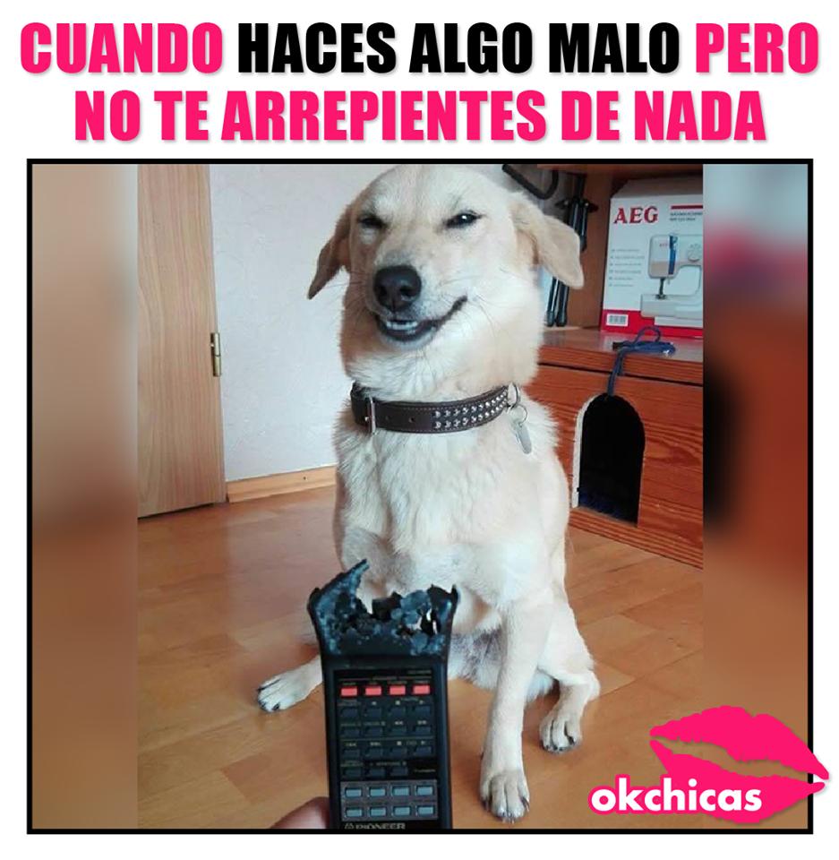 20 Divertidos Memes De Perros Que Te Harn Llorar De Risa In 2020 Memes Animal Memes Funny Memes