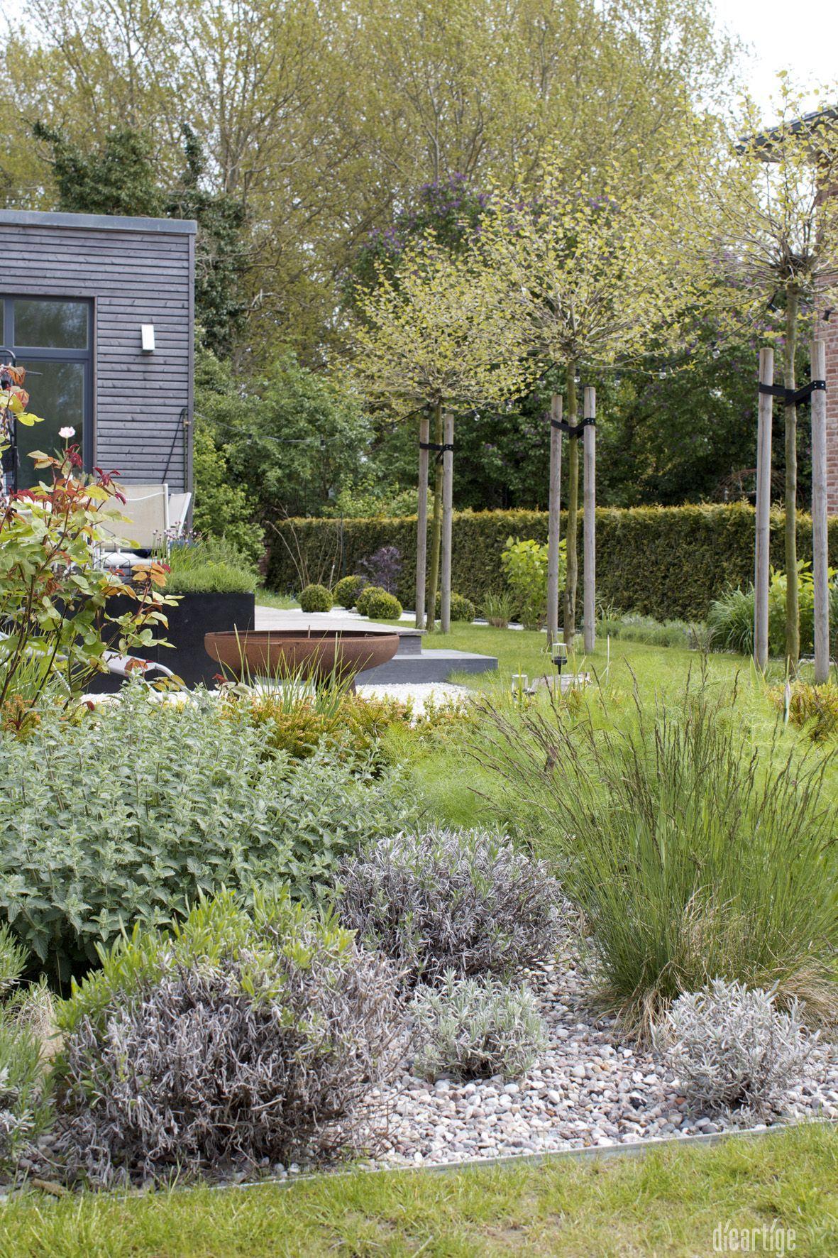 Dieartigeblog Garten Kiesbeet Mit Lavendel Katzenminze Rose Gra Sern Fenchel Terrasse Mit Kugelpla In 2020 With Images Patio Herb Garden Herb Garden Design Modern Garden