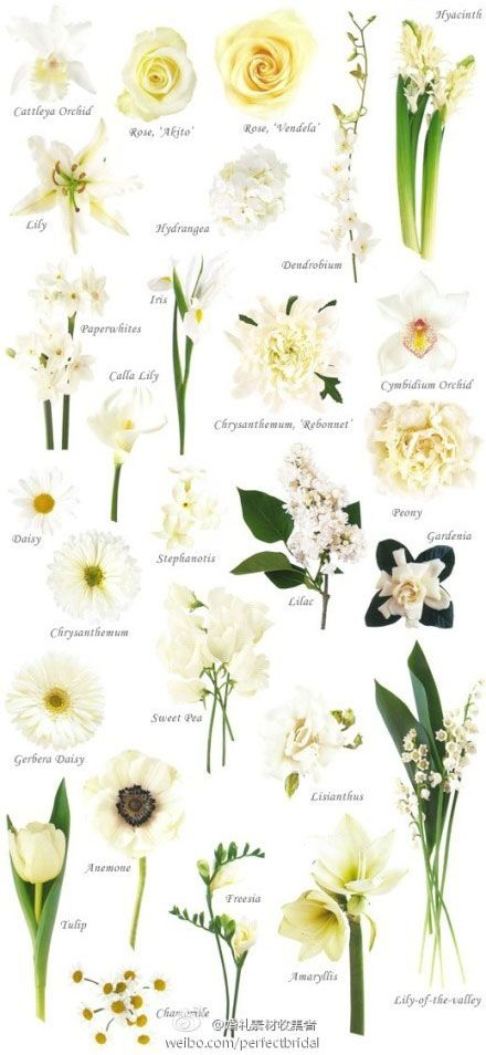 A Really Useful Guide For Putting Your Bouquet Together White And Cream Wedding Flower Types White Flowers Names Types Of Flowers