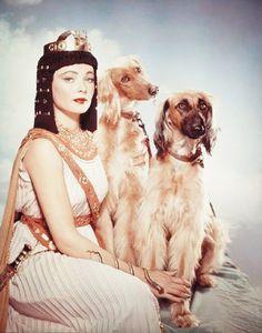 0 gene tierney with hounds - cleopatra