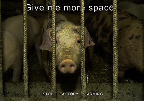 Animal Factory Farming???????????????????
