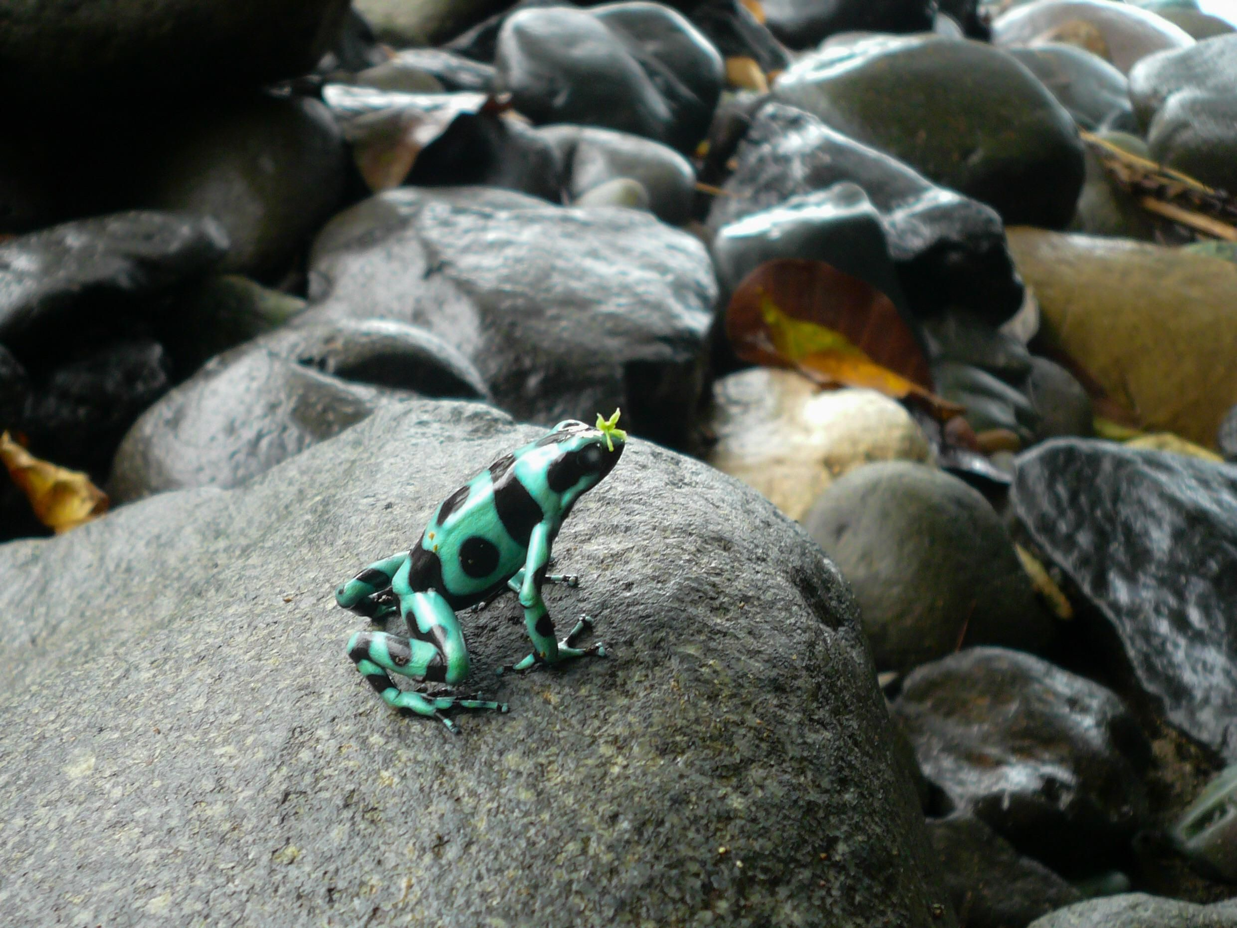 Saw this guy while hiking in Costa Rica http://ift.tt/2nP9OSh