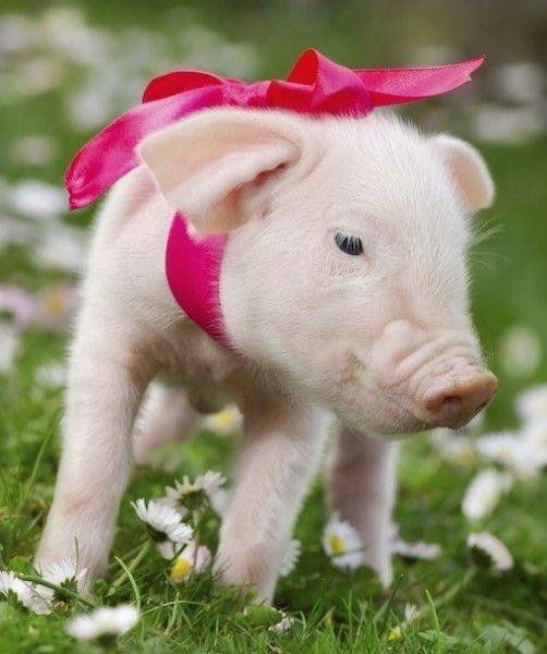Piglet :)