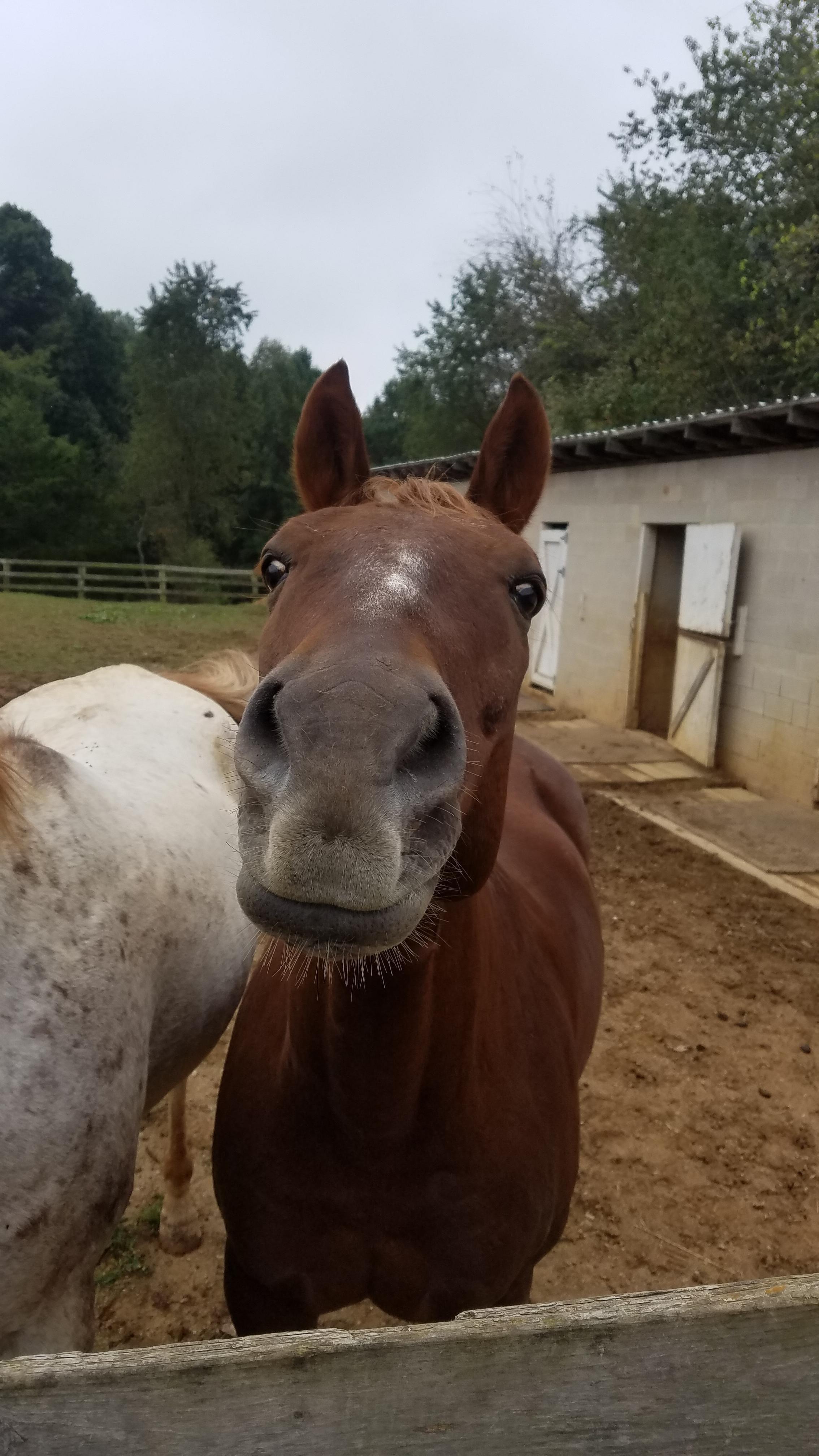 My guy Peppy! Begging for treats Horses, Guys