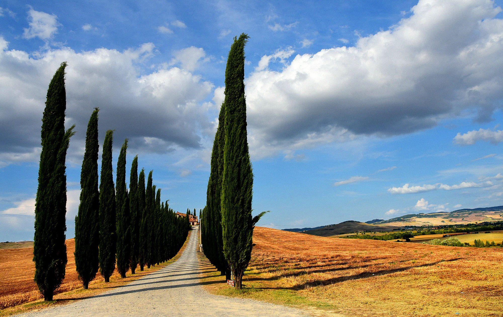 I Cipressi di Poggio Covoli (Val d Orcia Toscana Italy)  Landscapes photo by AngeloBalange http://rarme.com/?F9gZi