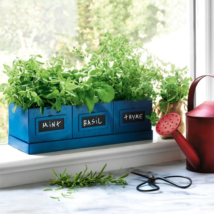 """Herb Pots And Tray Set 