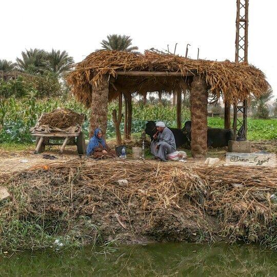 Villagers, fagnoun village, sakkara, giza, cairo, egypt