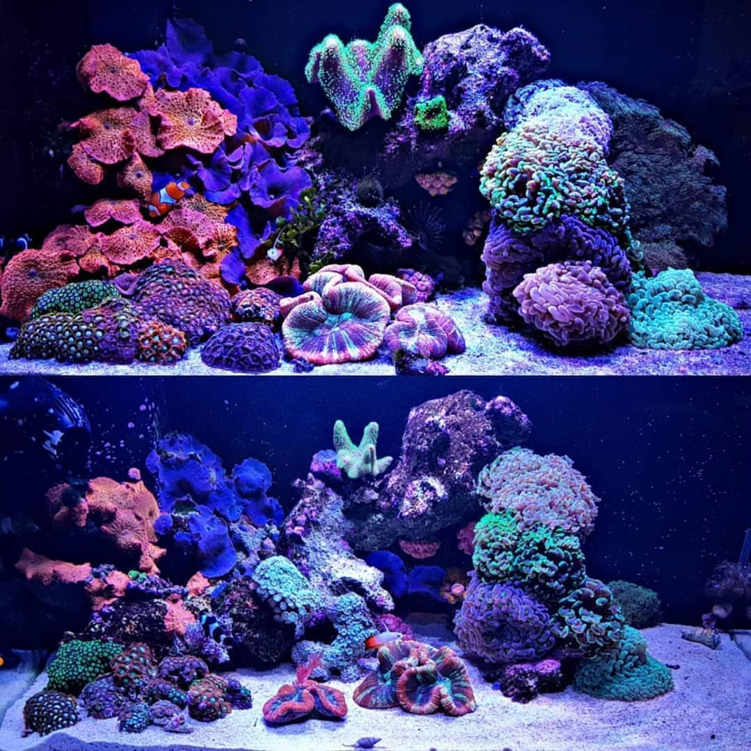 Love A Good Before And After Shot Running Illumagic Leds For 9 Months Good Luck Trying To Stop That Growth Instagram Posts Underwater Photography Instagram