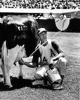 Oakland A S Catcher Phil Roof Squirts Milk During A Cow Milking Contest Before Athletics Home Game 1970 Photo By Ron Rieste Oakland Athletics Oakland Athlete