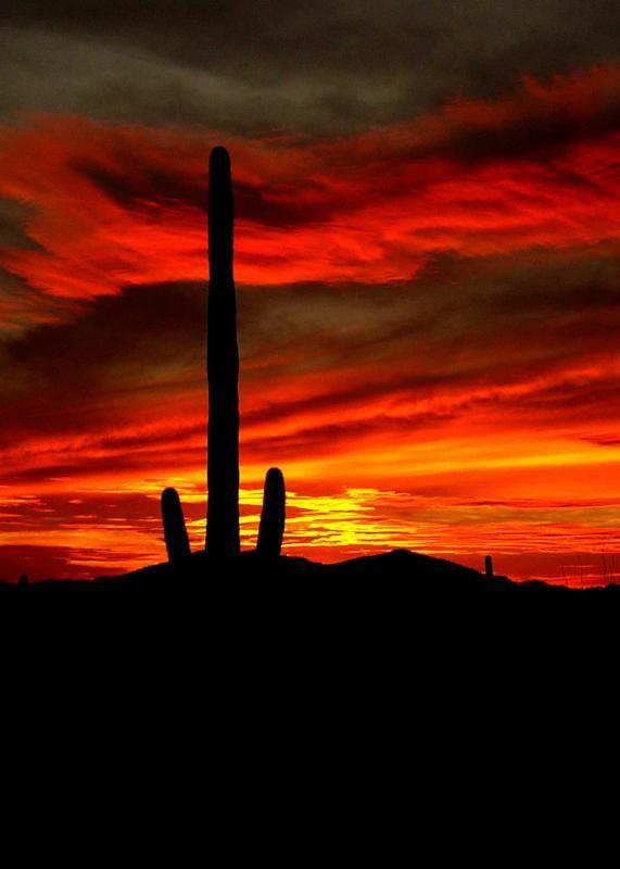 Tucson Az Arizona Sunset Desert Life Tucson Sunset