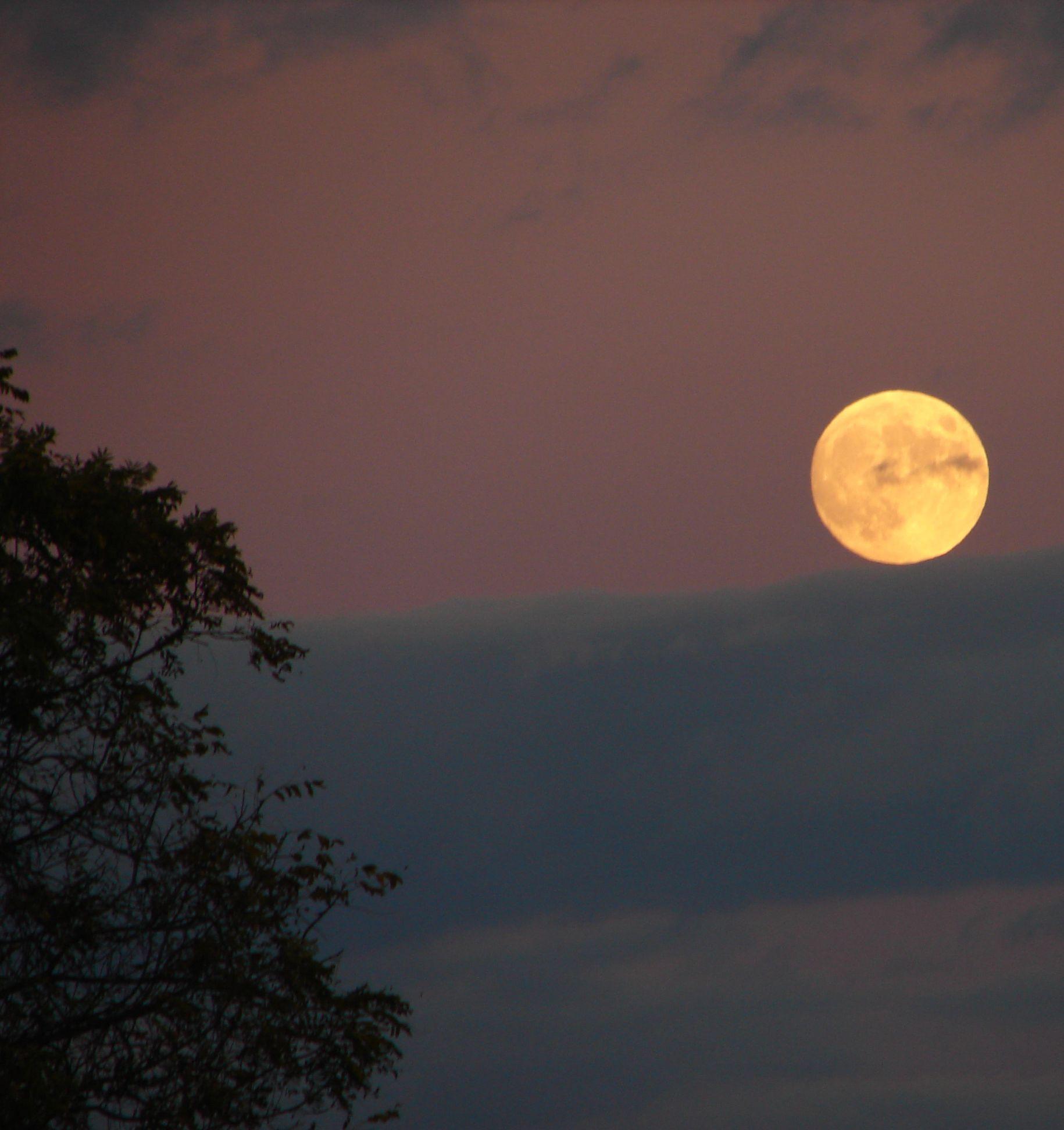 Pourquoi et comment jardiner avec la Lune | Planter avec ...