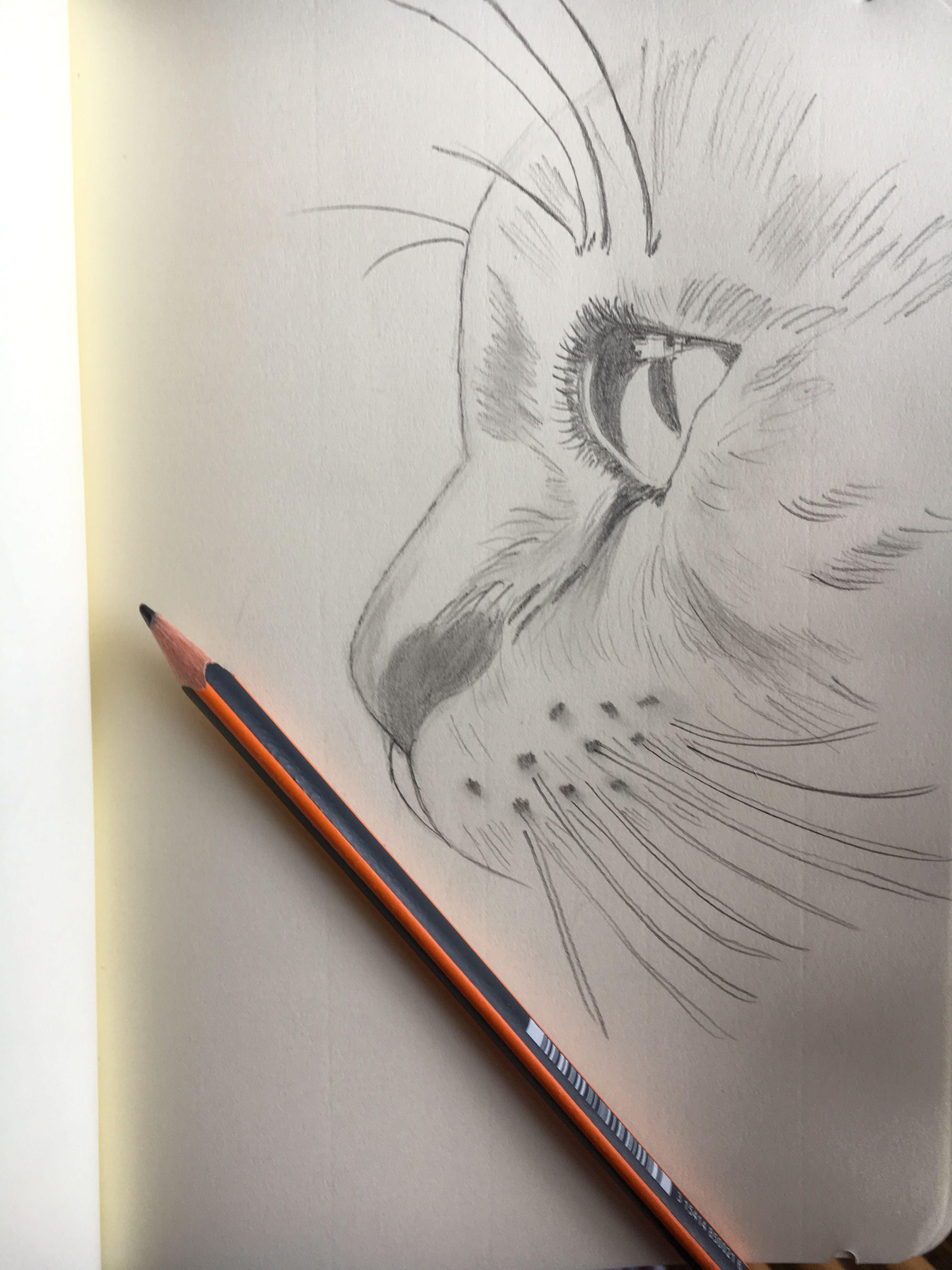 Bleistiftzeichnung Katze Cat Mit Bildern Bleistiftzeichnung