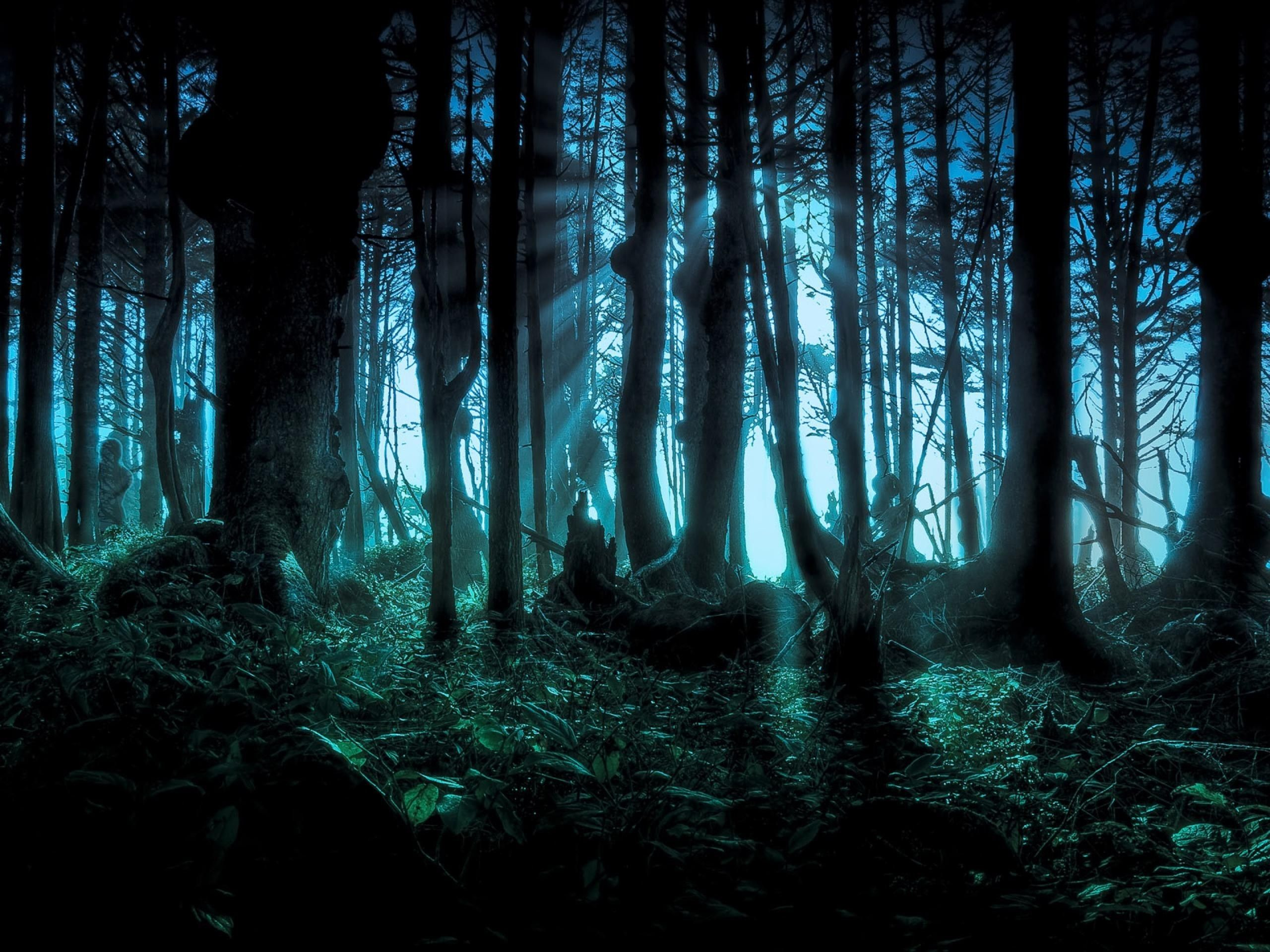 Spooky Halloween Backgrounds 55 Images Halloween Backgrounds Forest Wallpaper Background