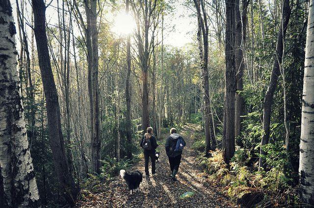 Forest, Sundsvall, Sweden