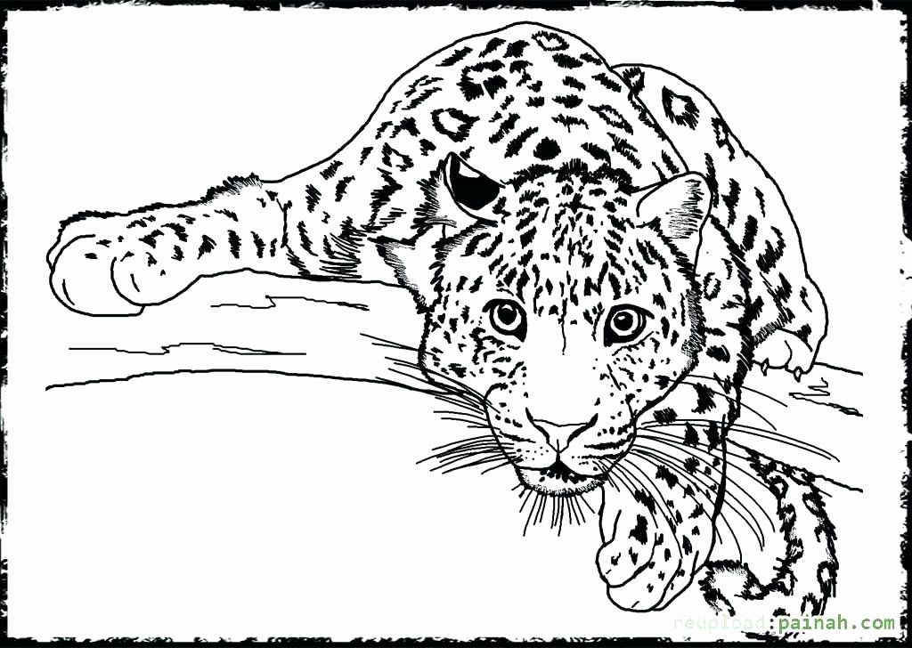 Coloring Pages Animals Realistic New Realistic Wild Animal Coloring Pages At Getcolori In 2020 Animal Coloring Pages Farm Animal Coloring Pages Detailed Coloring Pages