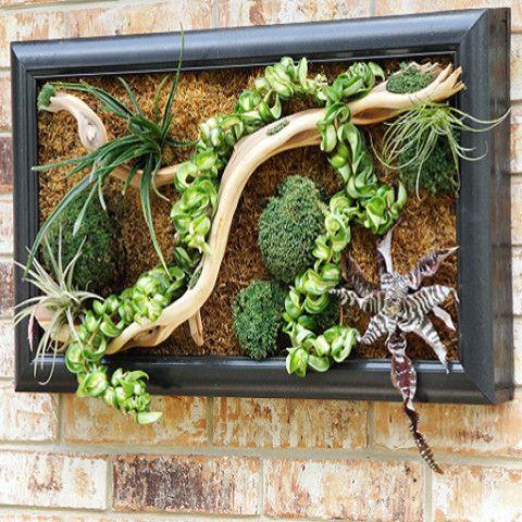 Succulent Vertical Garden Living Wall Art