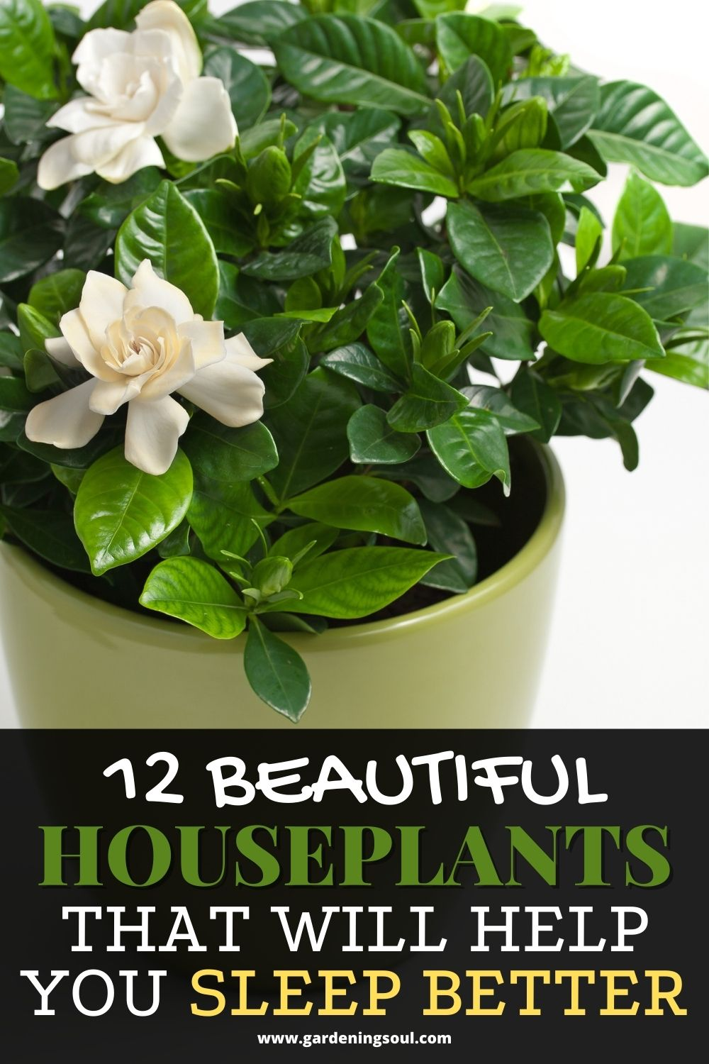 12 Beautiful Houseplants That Will Help You Sleep Better In 2020 House Plant Care Houseplants Healthy Plants