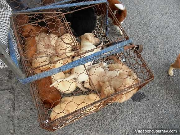 puppies-in-cage.jpg (580×435)