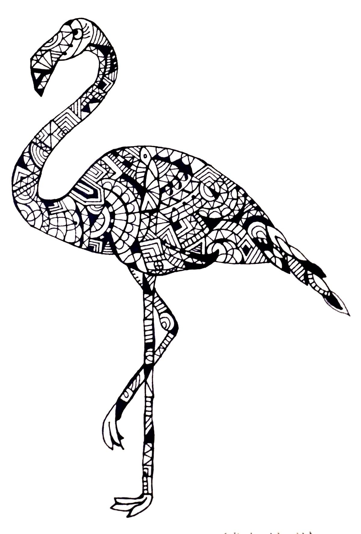 Coloring sheets for adults flamingo - Flamingo By Cecilie Wilsborg 2014