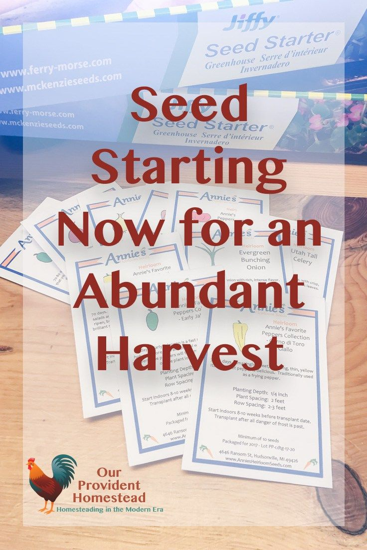Seed Starting for an Abundant Harvest | Hydroponic growing ...