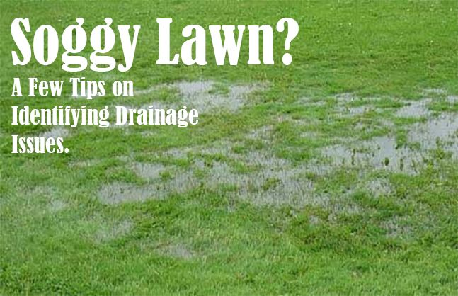 Identifying Drainage Issues in your Landscape   Drainage ...
