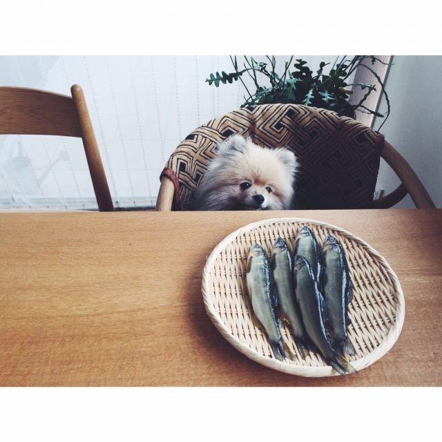 natsukoさんの、ダイニング,リビング,犬,観葉植物,ザル,ウェグナー,yチェア,机,のお部屋写真