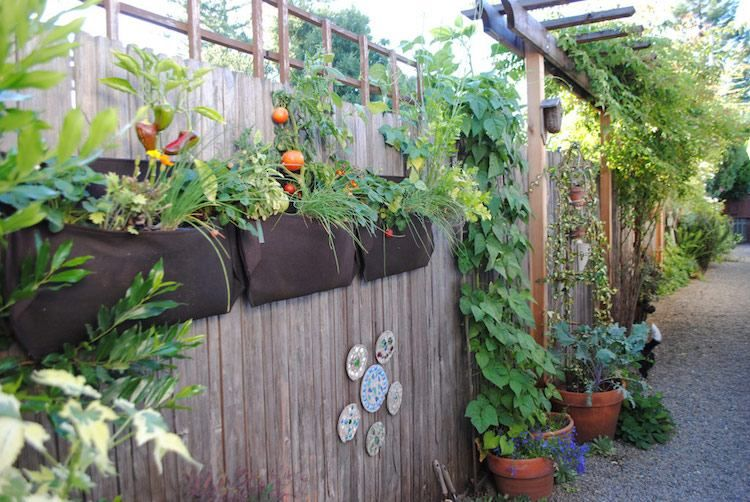 Potager vertical -conseils de fabrication et plantation verticale