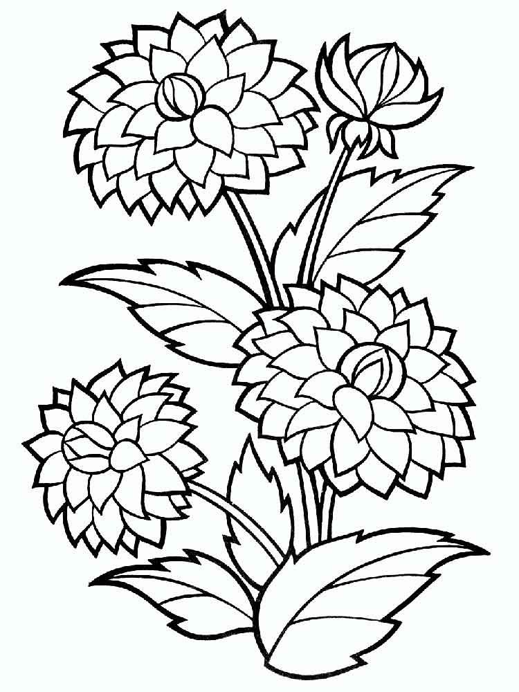 Dahlia Flower Coloring Pages With Images Flower Drawing