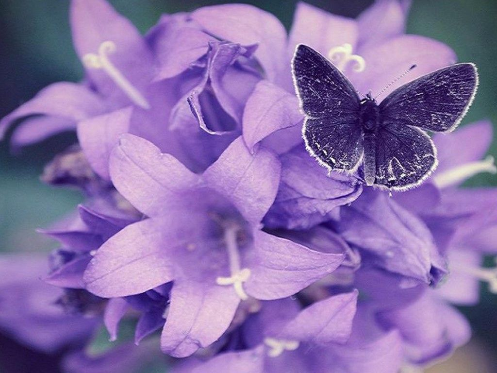 most beautiful flowers wallpapers butterflies - photo #29