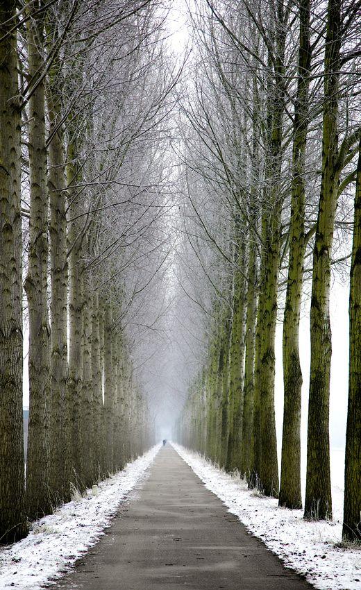 Endless Winter, Netherlands