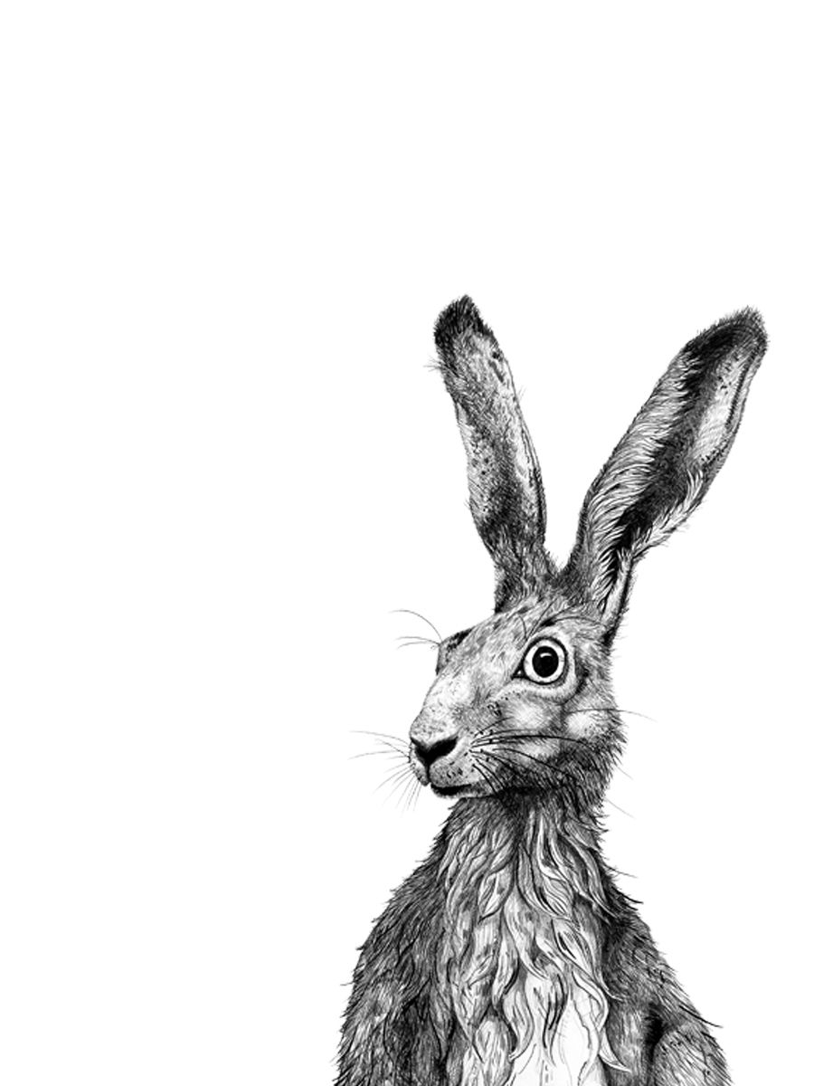 Feldhase. Hare. Hase. Hasi. Rabbit. Zeichnung. black&white ...
