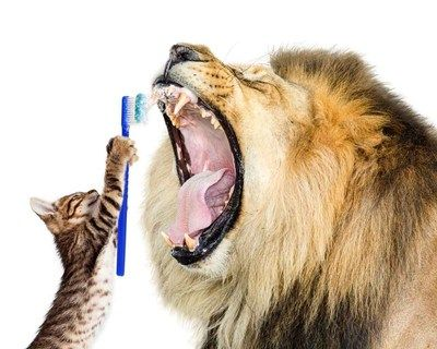 State of the Art Feline Dental Suite Offers Specialized